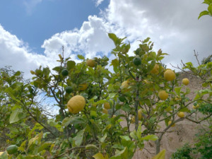 Seasonal Fruits and vegetables in Mallorca 4