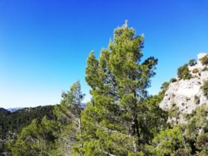 ¿Lo sabías? La Sierra de tramontana de Mallorca 9